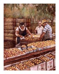 Painting of Lady selling peaches